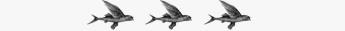 flying fish border 12